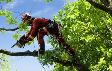find trusted rated Herefordshire tree surgeons