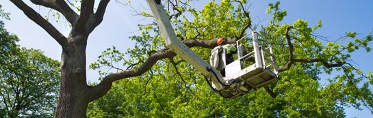 Herefordshire tree surgery services